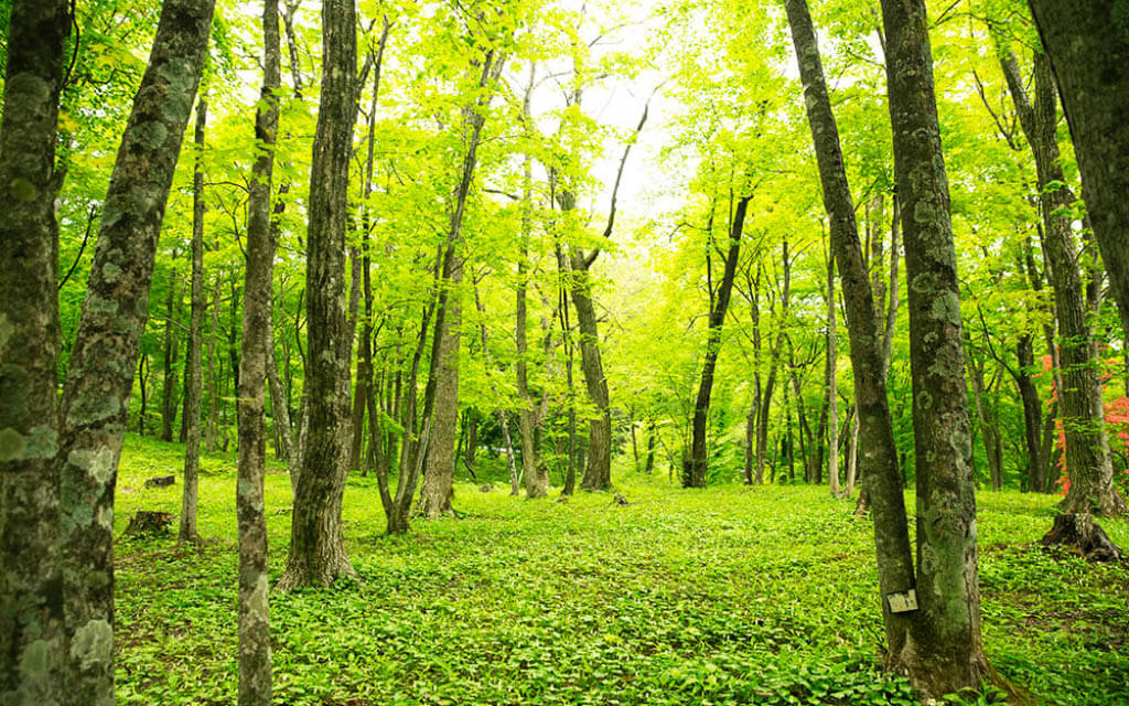 青根自然の森公園